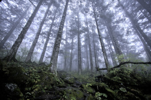 shennongjia_virgin_forest